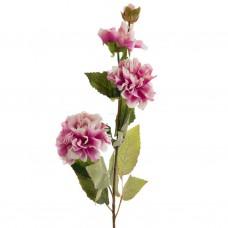 Flores y botones Zinnia