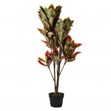 Planta con maceta Croton Haus