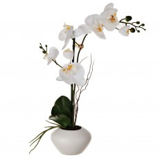 Arreglo Flor Orquídea con maceta blanca Haus