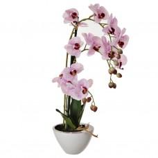 Arreglo Flor Orquídea Rosada con maceta Haus