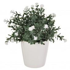 Planta extra pequeña con maceta redonda Haus