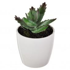 Mini cactus Verde con maceta redonda Haus