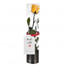 Rosa preservada con caja Lasting