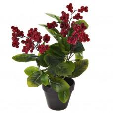 Planta Frutos Rojo con base gris