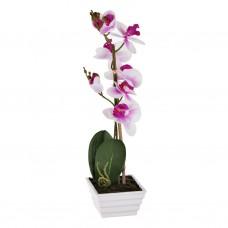 Arreglo Orquídea con maceta Blanco / Morado Haus