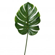 Hoja Phillo Verde