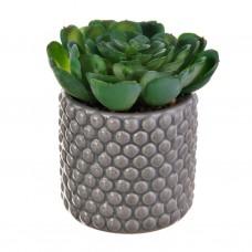 Mini planta suculenta con maceta gris