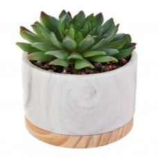 Mini planta suculenta con maceta marmoleada