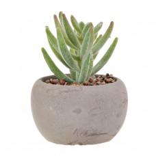 Extra mini planta suculenta alta con maceta