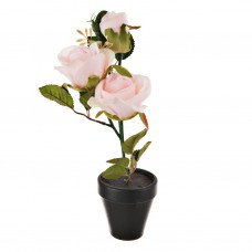 Planta Rosa con maceta