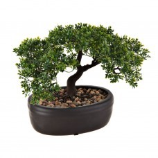 Planta Bonsai con maceta