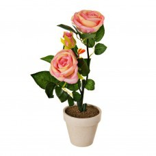 Planta con 2 rosas / botón y maceta Haus