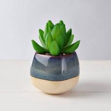 Mini planta suculenta con macetero Azul / Beige