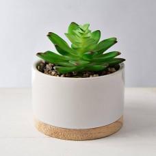 Mini planta suculenta con macetero Blanco / Natural