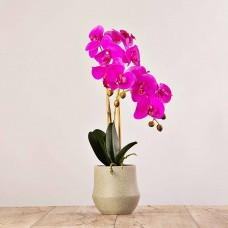 Arreglo Flor Orquídea con maceta jaspeada Haus