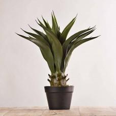 Planta Agave con maceta negra Haus