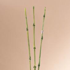 Juego de 3 Bambú Exótico Belinda Flowers