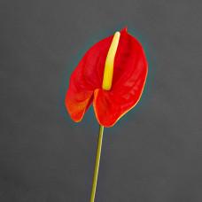 Flor artificial Anturio Haus
