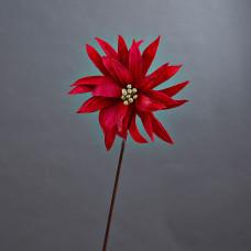 Flor Estrella de Panamá Belinda Flowers