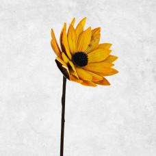 Flor Margarita Cedro Belinda Flowers