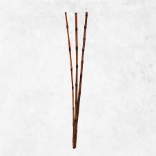 Bambú exótico x3 Belinda Flowers