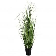 Planta espigas pequeña con maceta plástico / hierro / espuma Haus